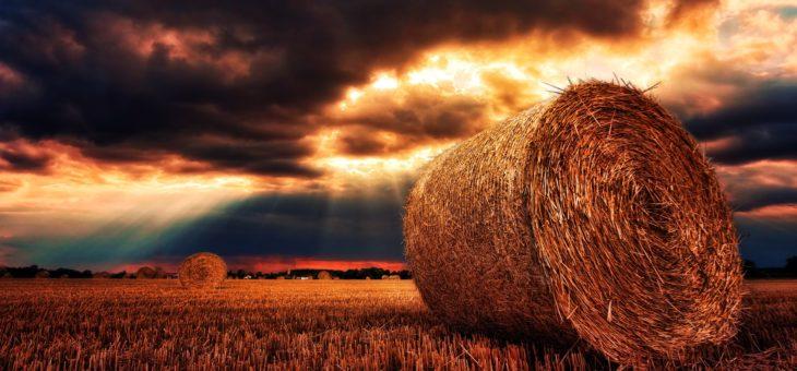 Жатва-2019: В Украине собрано 62 млн тонн зерна