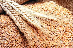 The UBN: Урожай зерновых достигнет рекордных 70 млн тонн