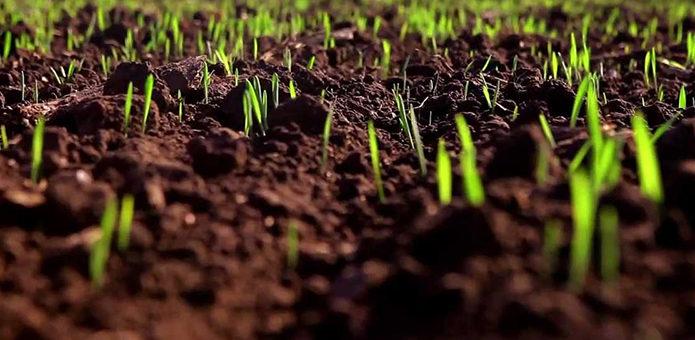 Благоприятные осадки прошли во всех странах производителях зерна