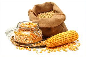 USDA повысил прогноз мирового экспорта кукурузы