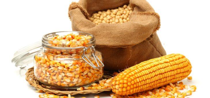 Рекордный экспорт украинской кукурузы пока оценивается в 26,2 млн тонн — ИА «АПК-Информ»
