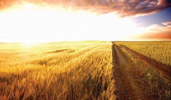 Жатва-2019: Почти все области приступили к уборке ранних зерновых культур