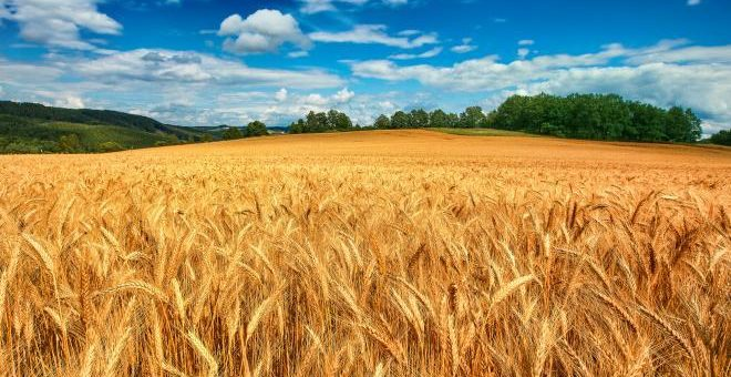 На «Агро-2019» представлен новый стандарт на пшеницу и обсуждены его особенности