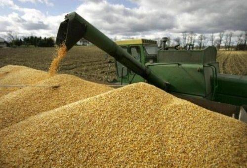 Украина с начала сезона отправила на экспорт 1,5 млн т зерна