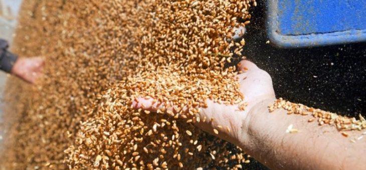 Урожай зерна в Украине составляет почти 56 млн. тонн