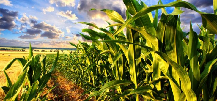 Ukraine's corn players look to join rare France arbitrage move