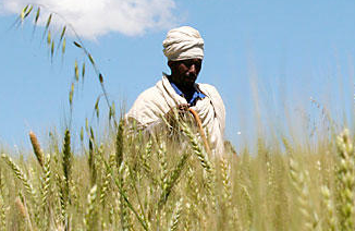 Египет закупил на тендере пшеницу из Украины, России и США