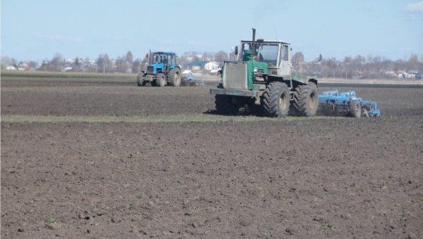 Украина засеяла озимыми зерновыми культурами 79% запланированных площадей