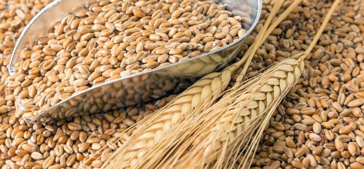 Отмена критических для зерновой отрасли ГОСТов перенесена на 2-3 года