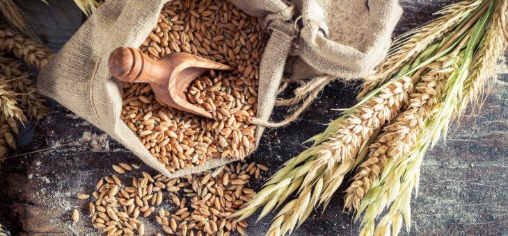 Экспорт зерновых превысило 20 млн тонн