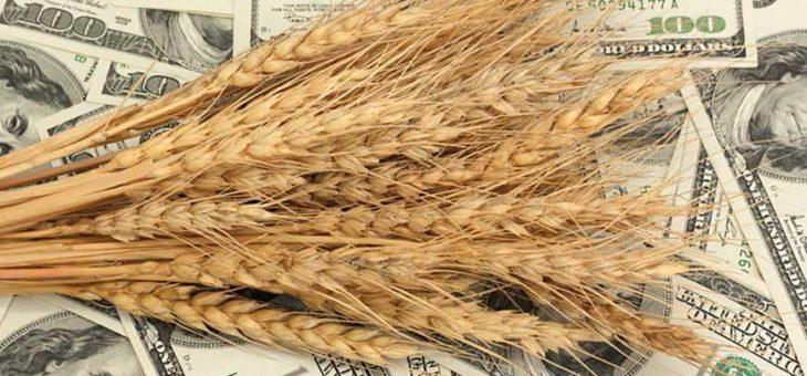 Украинская зерновая индустрия — современные вызовы отрасли и пути ее развития