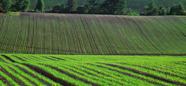 В Украине завершен сев ранних яровых зерновых культур
