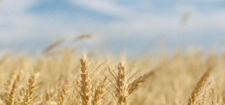 Жатва-2019: В Украине собрано 28 млн тонн зерна нового урожая