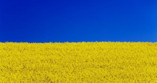 Экспорт из Украины зерновых, зернобобовых и муки