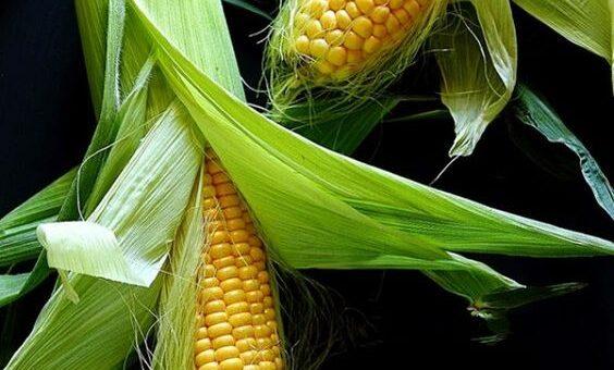 Кукуруза — лидер в структуре экспорта из Украины.